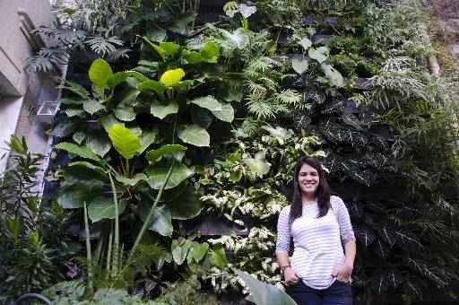 Catarina diz que procura por jardins verticais e telhados verdes cresce no Recife - Catarina diz que procura por jardins verticais e telhados verdes cresce no Recife (CRISTIANE SILVA/ESP.DP/D.A PRESS)